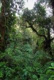 Interno di più cloudforest umido immagine stock libera da diritti