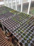 Interno di una serra del giardino con le piantine Fotografie Stock