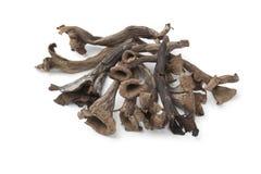 Intero corno fresco dei funghi di abbondanza Fotografia Stock Libera da Diritti