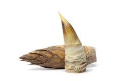 Intero e germoglio di bambù sbucciato fotografia stock