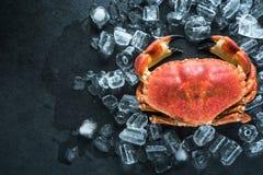 Intero granchio sull'ardesia e sul ghiaccio scuri fotografia stock