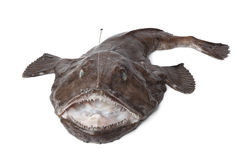 Intero Monkfish fresco Fotografia Stock