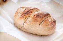 Intero pane compitato casalingo della farina fatto con lievito naturale Fotografia Stock
