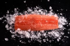 Intero raccordo di color salmone crudo su fondo nero su ghiaccio scheggiato immagine stock