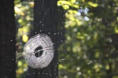 Intero Web di ragno Fotografie Stock