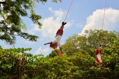 Interprètes d'acrobate de Voladores aux hommes de vol Photo stock