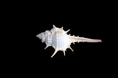 Interpréteur de commandes interactif d'escargot Image libre de droits