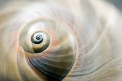 Interpréteur de commandes interactif d'escargot photographie stock libre de droits