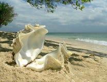 Interpréteur de commandes interactif d'huître de corail de plage   Photos stock