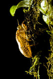 Interpréteur de commandes interactif d'insecte Photographie stock libre de droits