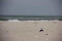 Interpréteur de commandes interactif dans le sable Photo stock