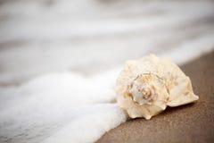 Interpréteur de commandes interactif de conque sur la plage photographie stock