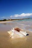 Interpréteur de commandes interactif de conque sur la plage Image libre de droits