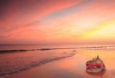 Interpréteur de commandes interactif de conque sur la plage au coucher du soleil photo stock