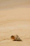 Interpréteur de commandes interactif de conque sur la plage tropicale Images stock
