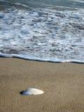 Interpréteur de commandes interactif de mer Photos libres de droits