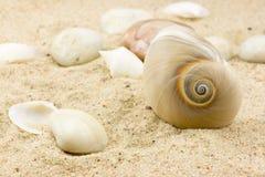 Interpréteur de commandes interactif de mer Photographie stock