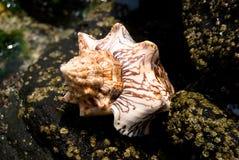 interpréteur de commandes interactif de mer Photo stock