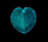 Interpréteur de commandes interactif de mer du coeur brisé Photo libre de droits