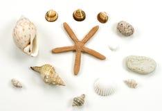 Interpréteur de commandes interactif de mer et ramassage de pierre Photo libre de droits