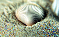 Interpréteur de commandes interactif de mer sur des sables Image libre de droits