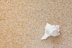 Interpréteur de commandes interactif de mer sur la plage Image stock