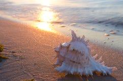 Interpréteur de commandes interactif de mer sur la plage sablonneuse Images stock
