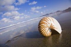 Interpréteur de commandes interactif de Nautilus Photographie stock libre de droits