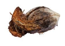 Interpréteur de commandes interactif de noix de coco Photo libre de droits