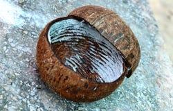 Interpréteur de commandes interactif de noix de coco Photographie stock libre de droits