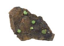 Interpréteur de commandes interactif Petrified et cristaux verts dans la pierre Image libre de droits