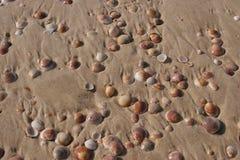 Interpréteur de commandes interactif sur la plage Image libre de droits
