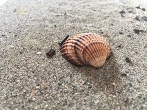 Interpréteur de commandes interactif sur la plage sablonneuse Photo stock