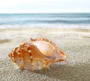 Interpréteur de commandes interactif sur la plage sablonneuse Photographie stock libre de droits