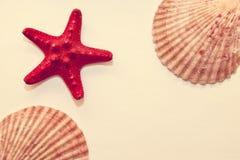 Interpréteurs de commandes interactifs d'étoiles de mer et de mer sur un fond de cru Images stock