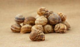 Interpréteurs de commandes interactifs d'Escargot Photo stock