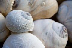 Interpréteurs de commandes interactifs d'escargot de lune I Image stock