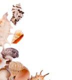 Interpréteurs de commandes interactifs de mer Photo libre de droits
