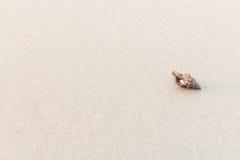 Interpréteurs de commandes interactifs de mer avec le sable comme fond Images libres de droits