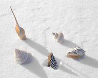 Interpréteurs de commandes interactifs de mer de l'hiver Image libre de droits