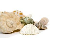 Interpréteurs de commandes interactifs de mer sur le fond blanc Photographie stock libre de droits
