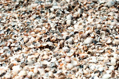 Interpréteurs de commandes interactifs de mer sur le sable Image stock