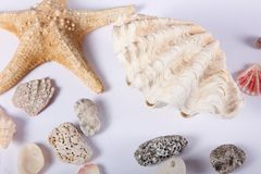 Interpréteurs de commandes interactifs et étoile de mer Image stock