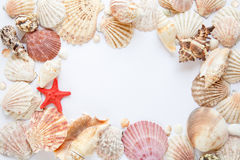 Interpréteurs de commandes interactifs et étoiles de mer Photo stock