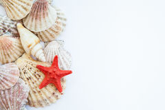 Interpréteurs de commandes interactifs et étoiles de mer Photos stock