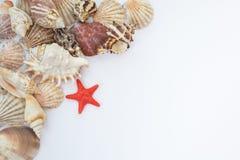 Interpréteurs de commandes interactifs et étoiles de mer Images libres de droits