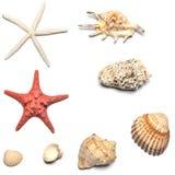 Interpréteurs de commandes interactifs et collections d'étoiles de mer Images libres de droits