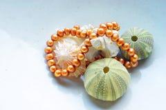 Interpréteurs de commandes interactifs et perles de mer Photos stock