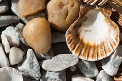 Interpréteurs de commandes interactifs et pierres de mer Image stock