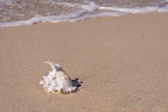 Interpréteurs de commandes interactifs sur la plage Photo stock